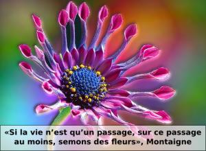 Fleur-Montaigne-f